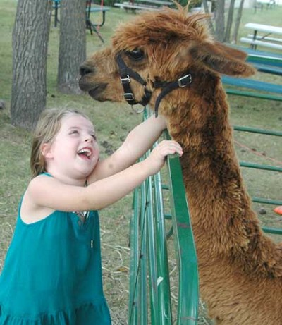 Taylee Norton, 5, of Racine, meets Pandora the alpaca from Rockie Top Acres near Spring Valley at the Stewartville Morning Lions Club Fall Festival on Saturday, Sept. 23.